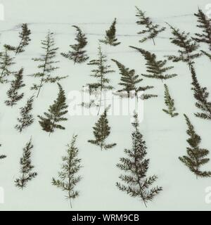 Ferns On Snow Covered Field - Stock Photo