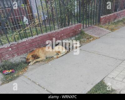 High Angle View Of Dogs Sleeping - Stock Photo