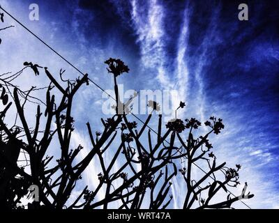 Low Angle View Of Silhouette Trees Against Blue Sky During Sunrise - Stock Photo