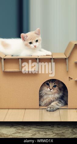 Close-up Of Kittens Sitting On Cardboard Box - Stock Photo