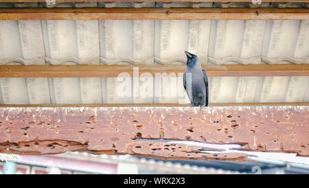 Low Angle View Of Crow Perching On Rusty Metal - Stock Photo