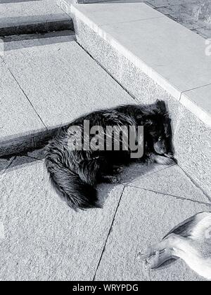 High Angle View Of Dogs Sleeping Outdoors - Stock Photo