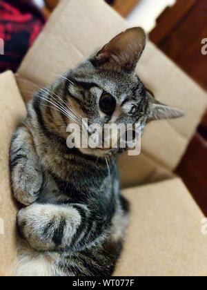Close-up Of Cat Sitting On Cardboard Box At Home - Stock Photo