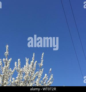 High Section Of Tree Top Against Clear Sky - Stock Photo