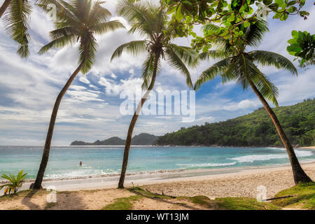 Palm trees on exotic beach at sunset with white sand and tropical sea on Paradise island.