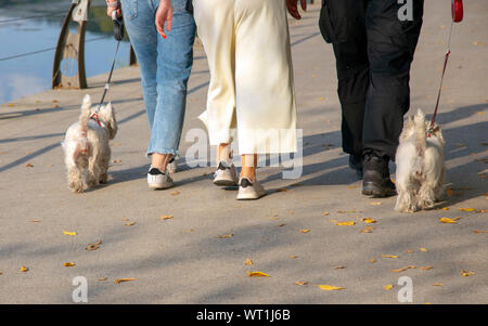 People walk along the waterfront with West highland white Terriers - Stock Photo