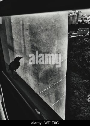 High Angle View Of Silhouette Bird On Balcony - Stock Photo