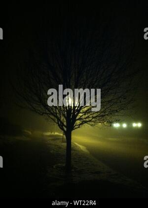 Bare Tree At Roadside In Misty Night - Stock Photo