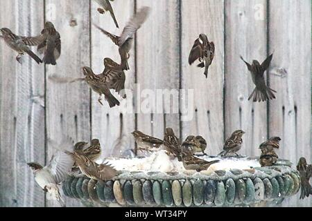 Flock Of Sparrows Flying - Stock Photo
