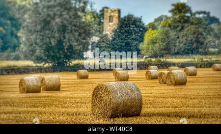 Hay Bales On Agricultural Field - Stock Photo