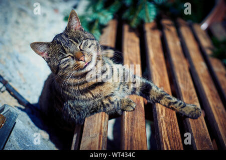 A gray cat sits on a bench - Stock Photo