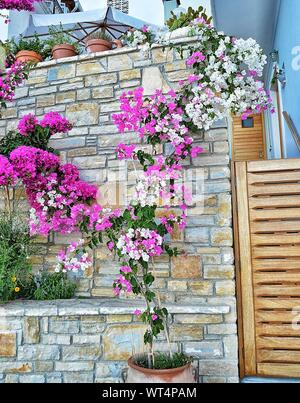 Flowering Plants On Wall - Stock Photo