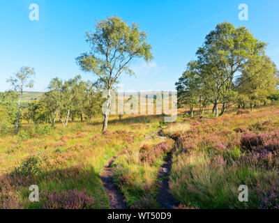 A narrow path between Silver Birch and heather down a hill to the open Derbyshire countryside. - Stock Photo