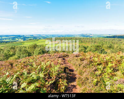 A narrow footpath between flowering heather leads off Birchen Edge and across Derbyshire - Stock Photo
