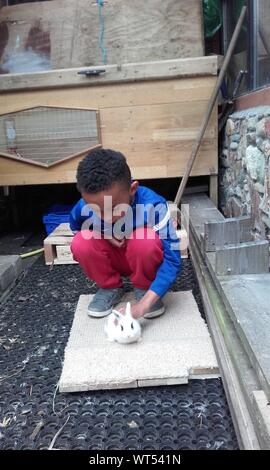 Little Boy Playing With Rabbit In Yard - Stock Photo