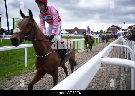 Winning race horses head to the parade ring at the world famous Cheltenham festival. The Uk's premier National Hunt race meeting. - Stock Photo