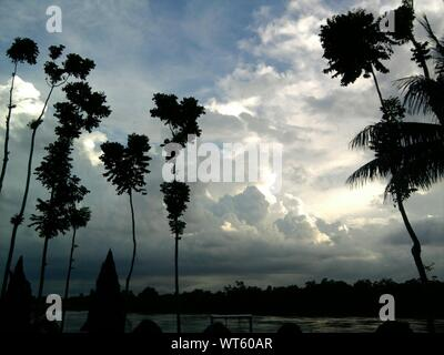 Low Angle View Of Silhouetted Trees Against Cloudy Sky - Stock Photo