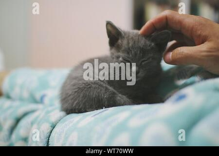 Close-up Of Male Hand Pampering Little Cat - Stock Photo