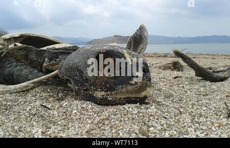 Close-up Of Turtle Skeleton At Beach - Stock Photo
