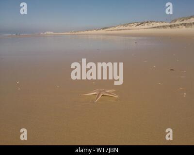 Starfish On Beach Against Clear Sky - Stock Photo