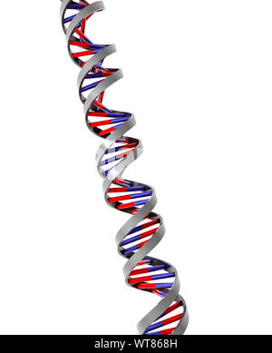DNA double helix molecular strand model - Stock Photo