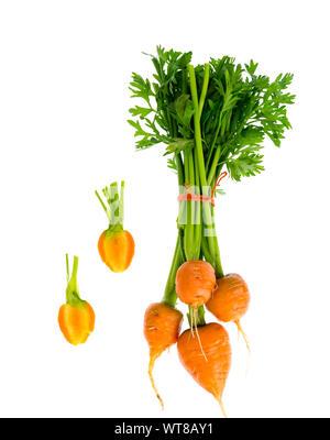 Just harvested Round romeo carrots, isolated on white background. Studio Photo - Stock Photo