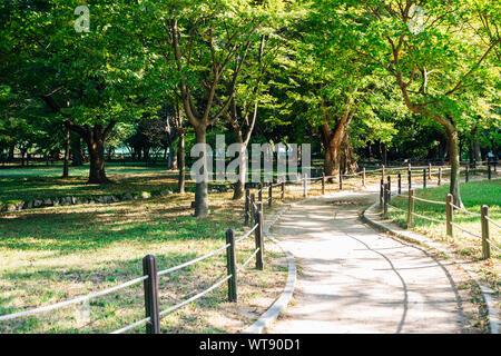 Green forest road at Gyeongju Gyerim in Korea - Stock Photo