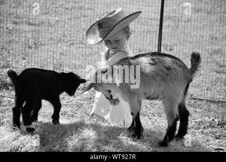 Boy Feeding Lambs On Field - Stock Photo
