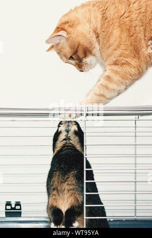 Close-up Of Cat Touching Rabbit In Cage Against White Background - Stock Photo