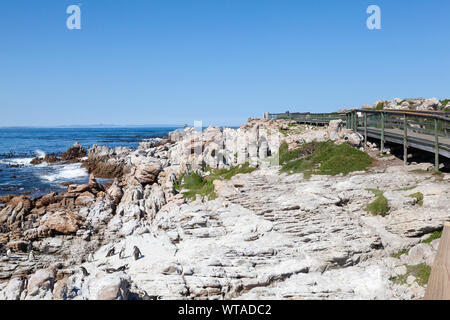 Boardwalk at the African Penguin (Spheniscus demersus) breeding colony at Stony Point Nature Reserve, Betty's Bay, Overberg, Western Cape, South Afric - Stock Photo