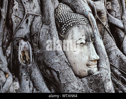 Head of Buddha statue in the tree roots at Wat Maha That temple.in Ayutthaya, Thailand - Stock Photo