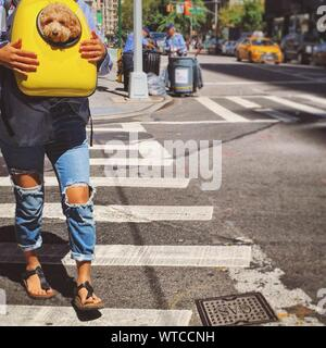 Low Section Of Woman Carrying Dog In Backpack On Road - Stock Photo