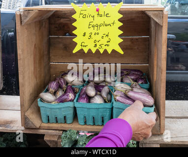 hand reaching in to pruchase tiny colorful fairytale eggplant at the farmers market with a price sign - Stock Photo