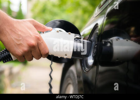 Mans hand inserting charger plug into electric car in green environment background. New energy vehicle, NEV is being loaded with electricity power. Ec - Stock Photo