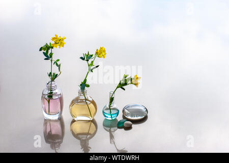 Three bottles of aromatic oils of different heights stand in line with a different color of oils. In the bottle stuck flowers. Reflections. - Stock Photo