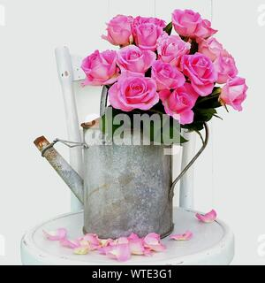 Close-up Of Pink Roses In Watering Can Against White Background - Stock Photo