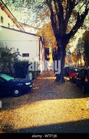 Autumn Leaves Fallen On Street - Stock Photo