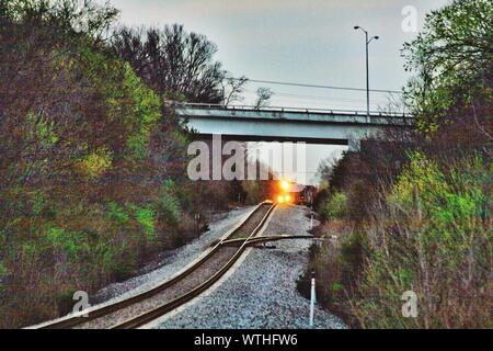 Train Passing Over Bridge Amidst Trees - Stock Photo