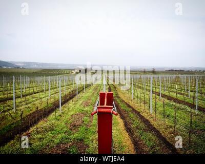 Tranquil Rural Scene With Vineyard In Springtime - Stock Photo