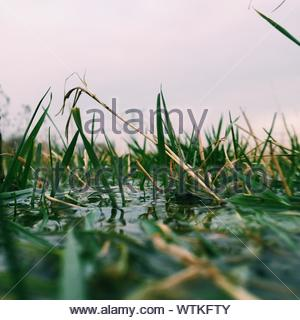 Plants Growing In Water Against Clear Sky - Stock Photo