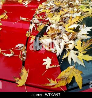 Autumn Leaves Fallen On Red Car - Stock Photo