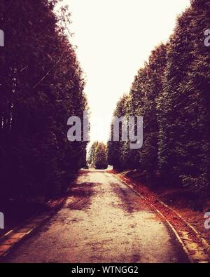Trees Along Walkway In Garden - Stock Photo