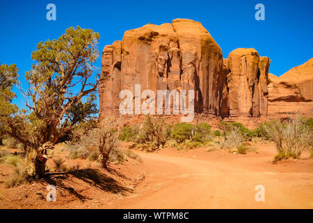 Plants Growing By Rock Formations At Monument Valley - Stock Photo