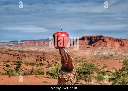 View Of Apple On Tree Stump In Desert - Stock Photo