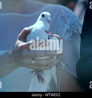 Close-up Of Woman Holding Dove - Stock Photo
