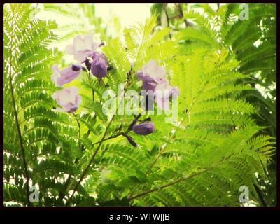 Low Angle View Of Purple Flowering Tree - Stock Photo
