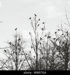 Birds Perched On Branches - Stock Photo