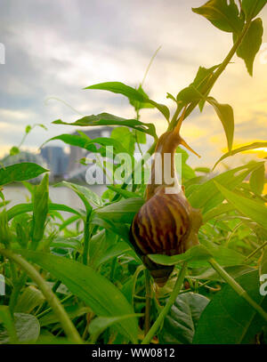 Snail climbing on plant in the evening beside the river opposite landmark building of Singapore at sunset. Slow life concept. Slow travel in Singapore - Stock Photo