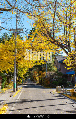 Karuizawa autumn scenery street view, colorful tree with red, orange, yellow, green, golden colors around the town in sunny day. Famous tourist attrac - Stock Photo