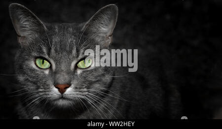 Grey alley cat with bright green eyes watchind the camera darks night background and striped pattern - Stock Photo